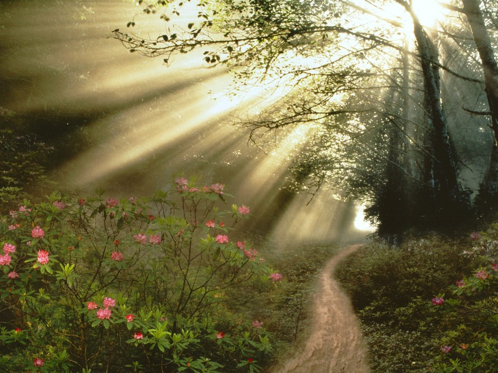 light in forest on flowers